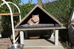 Feral Cat Shelters