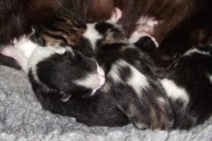 Kitten Development