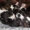 Kitten Development Day 1