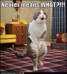 Neuter Means What?