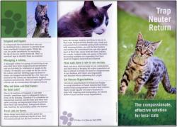 Feral Cats Ireland Flyer
