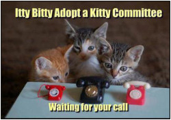 Itty Bitty Adopt a Kitty Committee