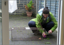 LFC Mary Mollica Setting a Trap for Use