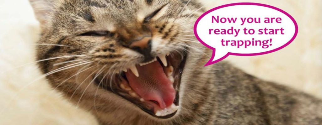 Maintaining and promoting Ireland's TNR Manual - How To Help Feral Cats