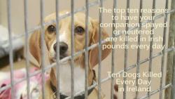 Pound dog by OK Humane Society